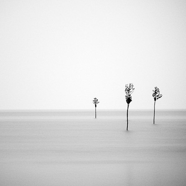 Clam Trees, Orleans, Cape Cod, Massachusetts