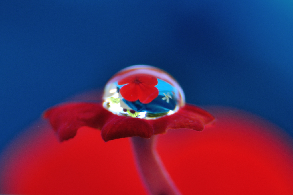 In a drop of water