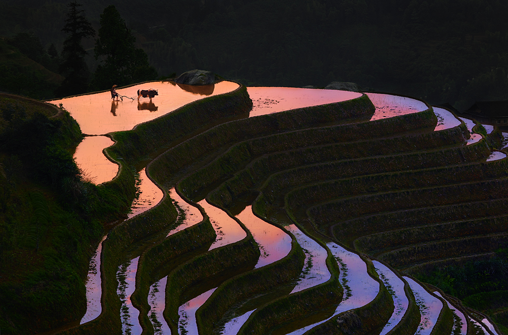 Beauty Paddy fields of China
