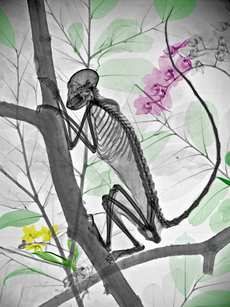 x-ray images of nature