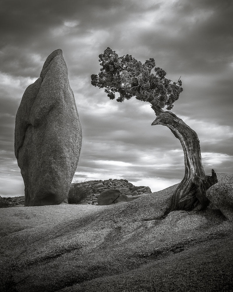 Joshua Tree Trees