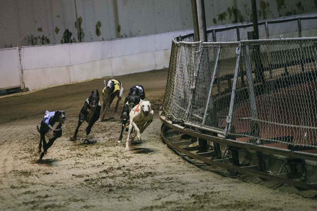 Last Greyhound Racing in Asia