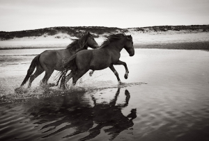 Discovering the Horses of Sable Island