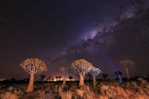 Quiver trees under the stars