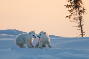 Arctic moments