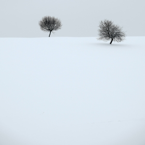 quiet winter