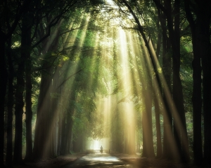 Forest and its light