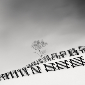 Snow Fences