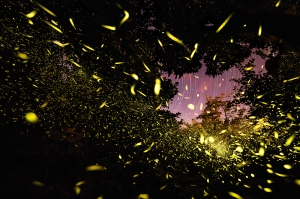 Explosion of fireflies