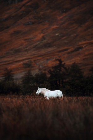 A Ghost in Scotland